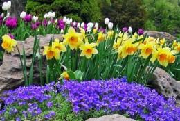 source: flowergardenpictures.com