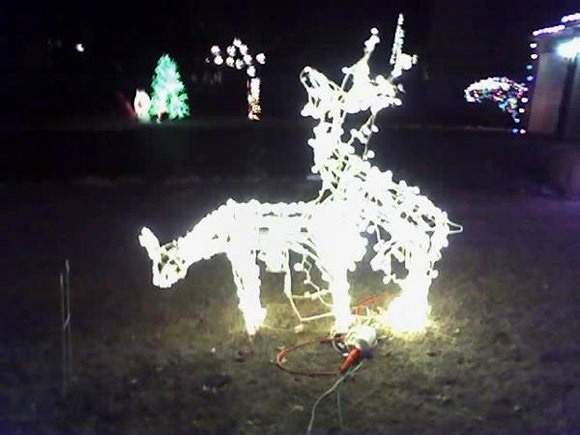 christmas lighted reindeer christmas lights card and decore