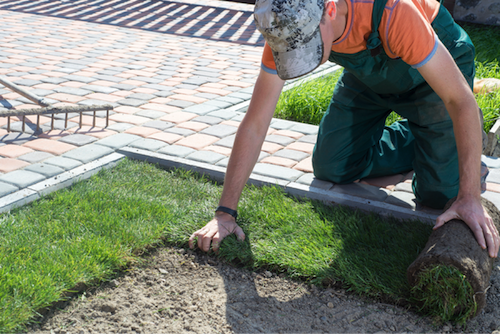 Common Mistakes You Should Avoid When Landscaping