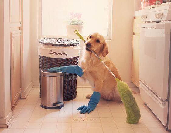 Quick Home Cleaning Tips for Pets | The House Shop Blog - Page 18729