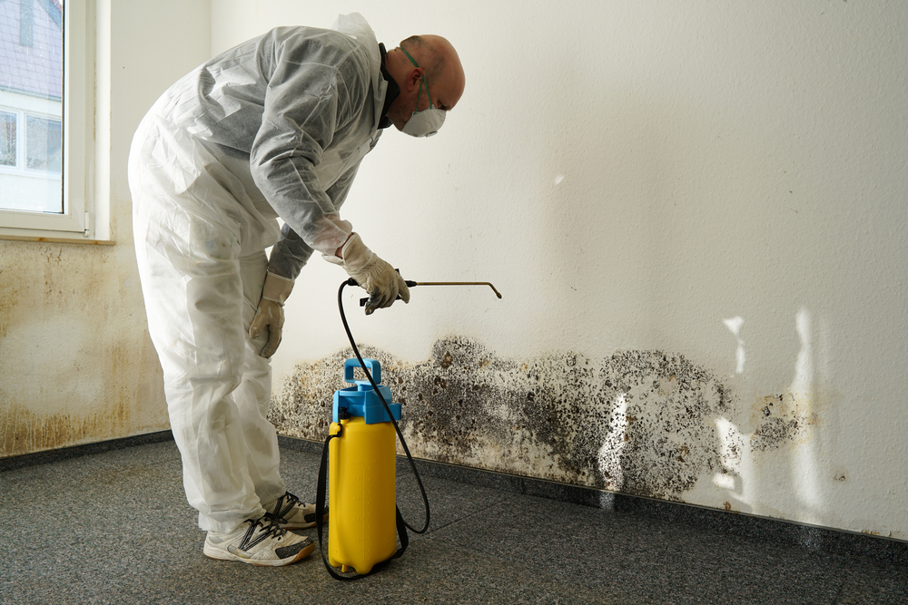 Does Painting Over Mold Stop Its Growth?
