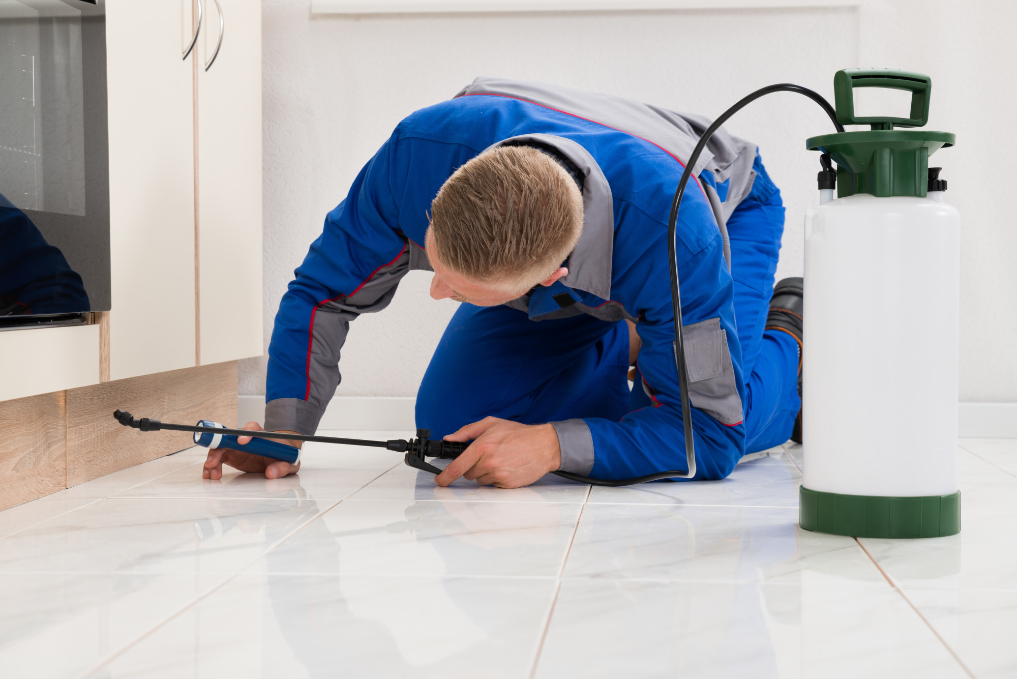 Reasons to Get a Pest Inspection for Home Purchase Before You Buy