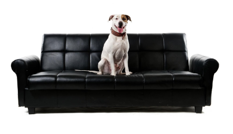 How To Dog Proof Your Furniture And, Dog Proof Furniture