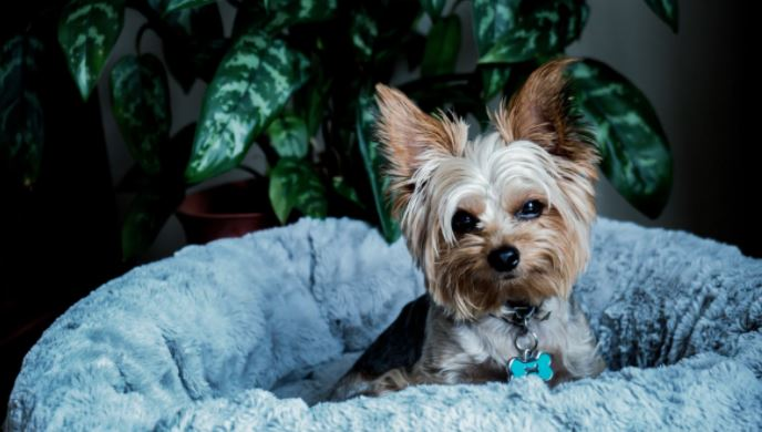 Top 7 Dog Breeds that are Perfect for Small Apartment Living