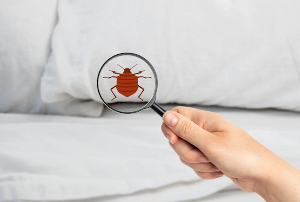 How to get rid of Bed Bugs in a Mattress?